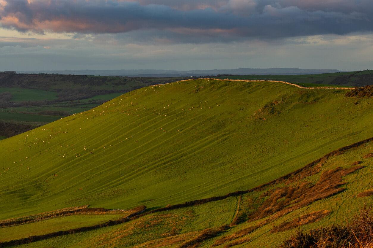 The Dorset Local Plan: green belt release
